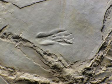 Empreinte de patte de ptérosaure à Crayssac, il y a 150 millions d'années