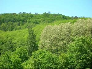 forêt filière bois